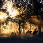 A Alzati Leadership Blog by Susan Ann Darley